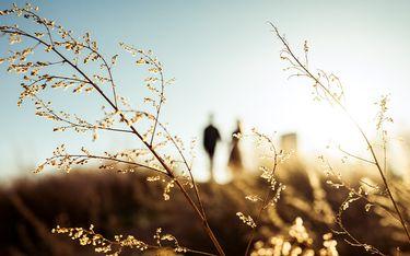 Nikon 20102_5.jpg